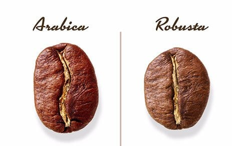 Differences between Arabica and Robusta